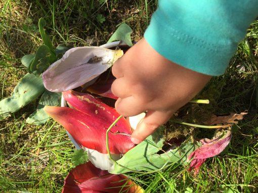 Bloemen planten en heksensoep…